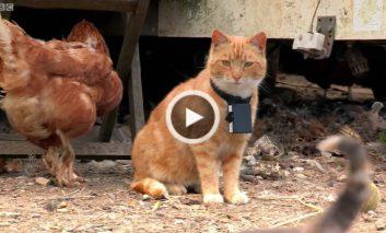 چرا خوردن گوشت برای گربهها ضرروی ست