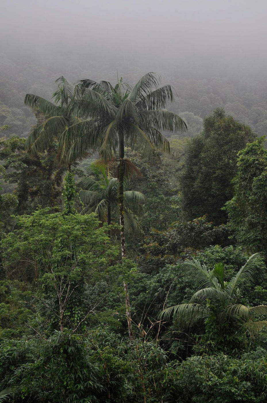 palm-tree-130530