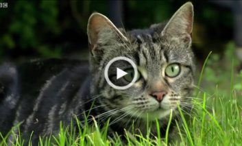 چرا گربههای خانگی به شکار کردن ادامه میدهند؟