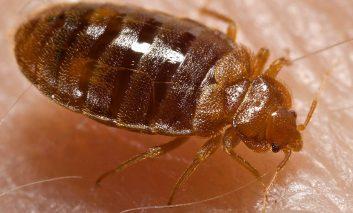 آشنایی با انواع حشرات و نیشهای آنها