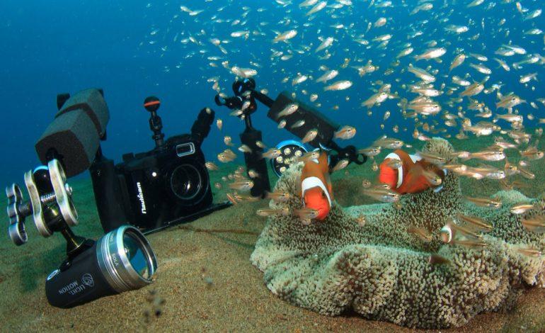 نکاتی برای گرفتن فیلمها و عکسهای زیر آبی