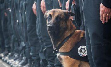 سگها در خدمت نیروهای امدادرسان و پلیس