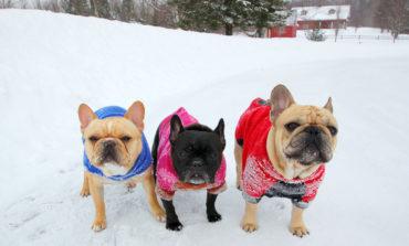 زمستان را برای سگها گرم کنید