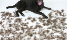 راه حل مشکل موی حیوانات خانگی در منزل