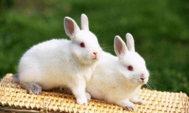 خرگوش حیوان خانگی محبوب شما