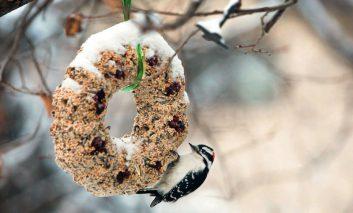 با ساختن این دانههای خوشمزه پرندگان را به حیاط خانه خود دعوت کنید