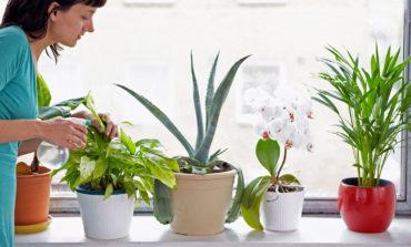 بهترین گیاهان آپارتمانی برای کاهش گرد و خاک