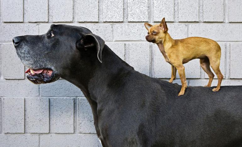 چگونه نژاد سگ مناسب با سبک زندگی خود را انتخاب کنید