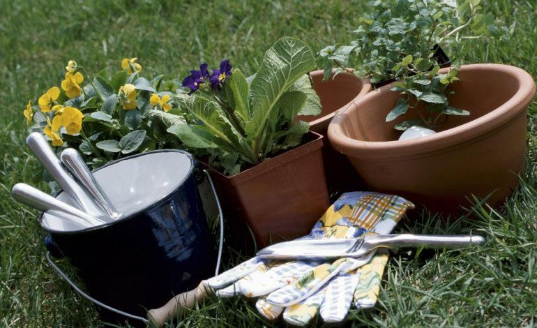 باغبانی در سطل؛ یک تجربه ارزان و پرنشاط