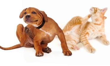 حیوان خانگی خود را از شر ساس و کنه نجات دهید