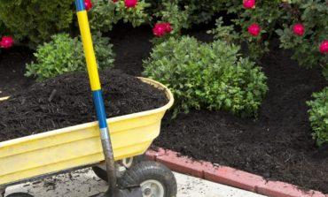 تأثیر انواع خاک گلدان بر رشد گیاهان