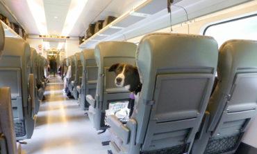 مصائب سفر با حیوانات خانگی
