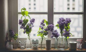 این گیاهان آپارتمانی فضای اتاق را خوشبو میکنند