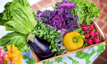 بهترین و موفقترین روش برای کاشت و پرورش سبزیجات متنوع