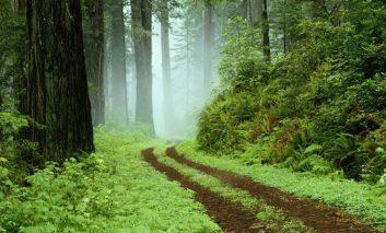 نکاتی مفید و کاربردی برای گردش در جنگلهای برگریز معتدل