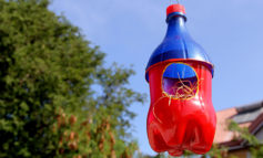 اینجا خانه شما نیست... اینجا بهشت پرندگان است!