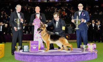 صحنههایی جالب و بامزه از نمایش امسال سگها