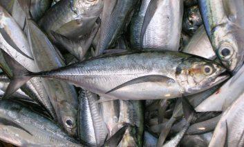 راههای تشخیص ماهی تازه از فاسد