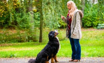 اصول اولیه اصول تعلیم و تربیت سگ