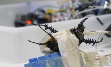 ساخت روبات از حشرات