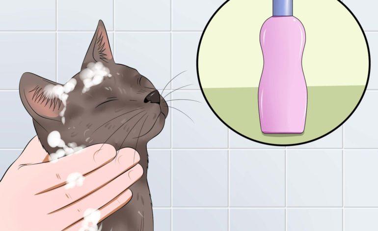 فوتوفن حمام گربه