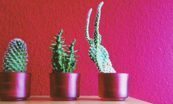 ۱۰ گیاه جان سخت برای نگهداری در آپارتمانتان!