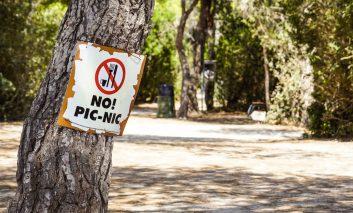 عجیب اما باورکردنی: درختان گوشتخوارند