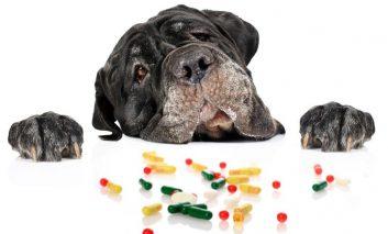 چگونه به سگ خود دارو بدهیم