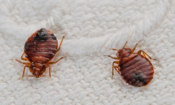 راه فرار از شر حشرات موذی هتلها و مسافرخانهها