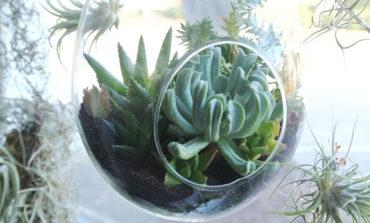 گیاهان دیواری، گیاهان سقفی!