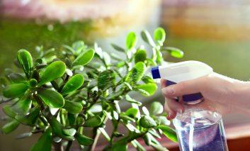 ۳ نکتهای که گیاه آپارتمانی را سالم نگه میدارد - قسمت دوم