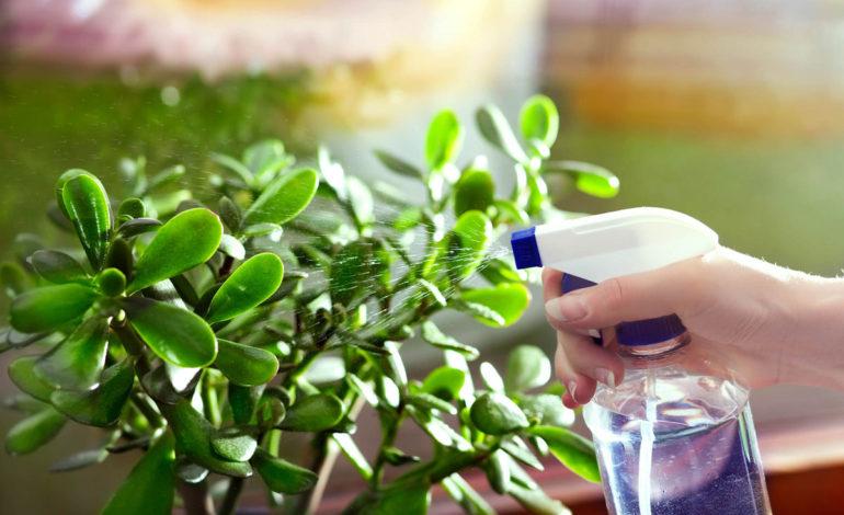 ۳ نکتهای که گیاه آپارتمانی را سالم نگه میدارد – قسمت دوم