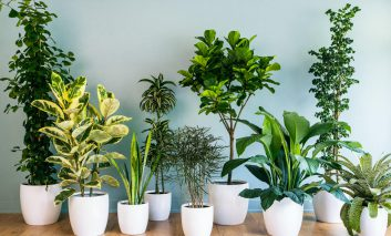 چند گیاه برای آپارتمانهای تاریک - قسمت دوم