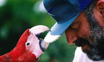 چگونه به پرنده خود صحبت کردن بیاموزید