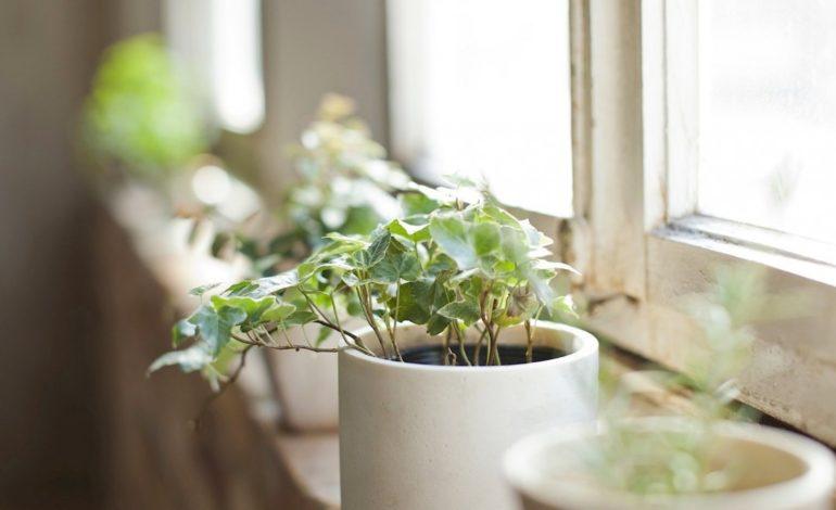 چرا باید گیاهان خانگی داشته باشیم؟