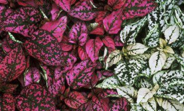 فوت و فن پرورش گل سنگ