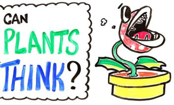 آیا گیاهان میتوانند فکر کنند؟