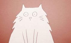 چرا گربهها این رفتارها را میکنند؟