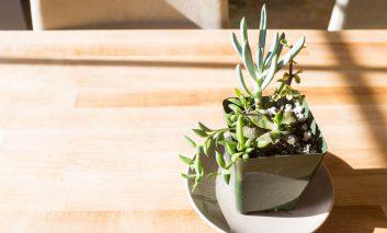 از این ۹ اشتباه اجتناب کنید، گیاهانتان نمیمیرند!