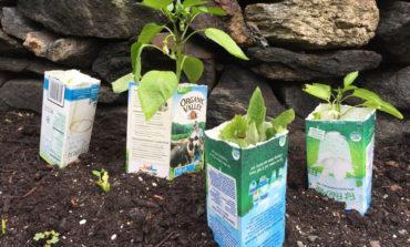 از شیر برای پرورش گیاهانتان استفاده کنید و منتظر این سورپرایزها باشید!