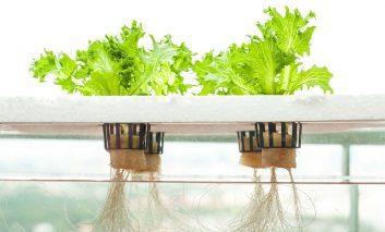 این ۶ سبزی را در آب پرورش دهید!