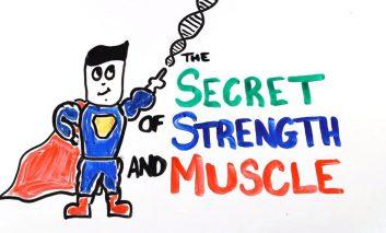 راز علمی قدرت و رشد ماهیچه