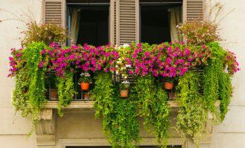 ۵ نکته اساسی برای داشتن گلدانهایی سرحال!
