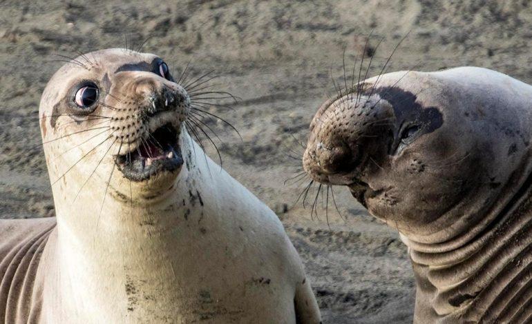 مسابقه عکاسی طنز از حیات وحش
