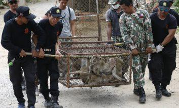حمله ارتش میمونها به گردشگران در تایلند
