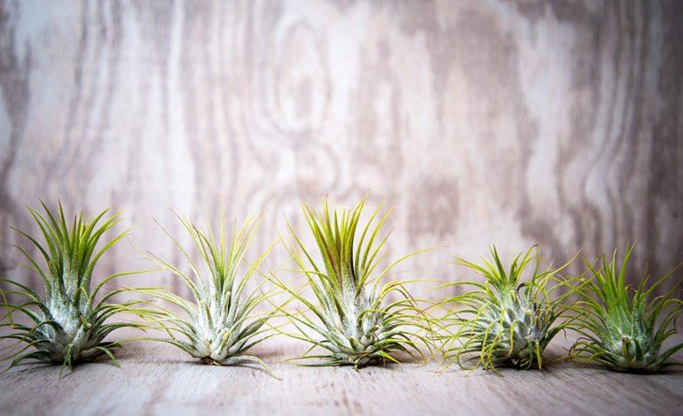 گیاهانی بر آسمان!
