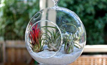 بهترین گیاهان برای تراریوم! – قسمت اول