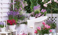 رزهایی درون گلدان!