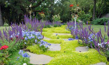 با این گیاهان فضای باغچهتان را پر کنید!