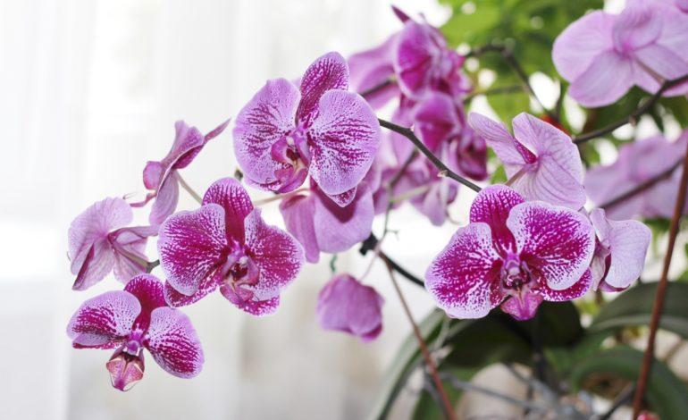 این گیاه با شکوه و گران قیمت! – قسمت اول
